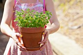 Woman holding flower pot of oregano in garden