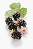 Blackberries with flower and leaves
