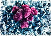 Raspberries on frozen blueberries