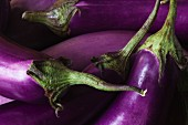 Five Fresh Organic Eggplants from the Garden