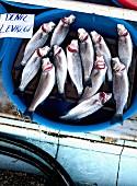 Fresh fish in a bowl on a market (Turkey)