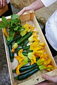 A chef holding a crate of courgette flowers