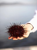 Hand with Sea Urchin