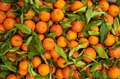 Fresh Oranges, Morocco