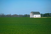 Barn in Green Field, Ocracoke, North Carolina, USA,