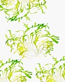 Lettuce Leaves on White Background