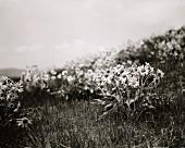 Wild wachsende Blumen auf einer Wiese