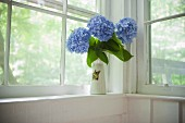 Blue hydrangeas in vase on window sill