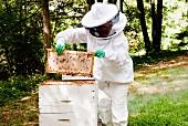 Beekeeper Unloading Honeycombs
