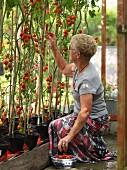 Ältere Frau pflückt Kirschtomaten im Gewächshaus
