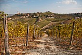 Vineyard With Hillside Village in Background, Barbaresco, Italy
