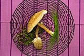 Fresh parasol mushrooms and herbs