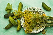 Pickling cucumbers and fresh dill