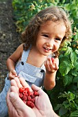 A little boy sharing freshly picked raspberries with his granddad