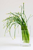 Fresh chives in a glass of water
