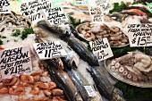 Fresh seafood display at a fish market