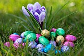 Chocolate eggs wrapped in colourful foil in a spring meadow
