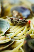 Taglierini with clams