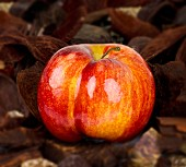 A red apple on autumnal leaves
