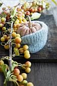 Zierkürbis im Strickmantel mit Zieräpfeln