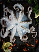 An octopus with chilli peppers and lemon on a baking tray