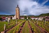 Église Saint Just and vineyard, Arbois, Jura, France