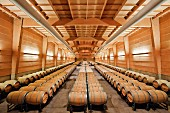 First-year barrel room of Almaviva winery, Maipo Valley, Chile