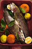 Rainbow trout with lemons and mandarins