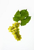 Bacchus grapes with a vine leaf