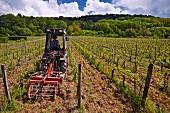 Harrowing between rows in vineyard of Domaine du Pélican. Montigny-les-Arsures, Jura, France. [Arbois]