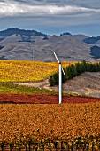 Wind machine in Edna Ranch Mountainside vineyard of Tolosa Estate. San Luis Obispo, California. [Edna Valley]
