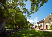 Vergelegen Manor House and the 300-year old Camphor Trees which are National Monuments. Somerset West, Western Cape, South Africa. [Stellenbosch]