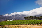 Vergelegen winery and vineyard with the Hottentots Holland Mountains in distance. Somerset West, Western Cape, South Africa. [Stellenbosch]