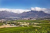 View from vineyards in the Polkadraai Hills towards Stellenbosch and the Helderberg mountain. Western Cape, South Africa.