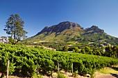 Simonsberg aus der Richtung von Clouds Vineyards (Stellenbosch, Western Cape, Südafrika)
