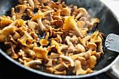 A pan of chanterelle mushrooms