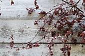 Blühende Zweige auf Holz