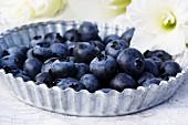 Fresh blueberries on a zinc plate