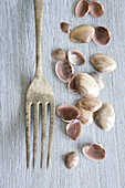 Small shells and an old silver fork