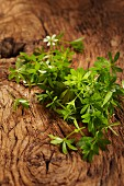 Fresh Woodruff growing on a tree stump