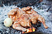 Chicken cooking over a camp fire