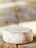 Ein Laib Schweizer Mutschli Käse