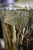 Dried bay leaves in a plastic cup