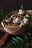 Fresh brown mushrooms in a basket