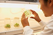 A smiling scientist looking at tiny plants in a petri dish