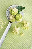 Romanesco cauliflower on an enamel draining spoon