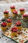 Weihnachtskonfekt: Weihnachtsstern im Blumentopf