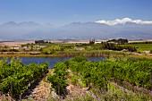 Weinberge und Teich von Vondeling, Paarl, Western Cape, Südafrika
