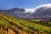 Franschhoek Valley aus Richtung der Weinberge von Boekenhoutskloof (Western Cape, Südafrika)