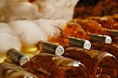 Mehrere Flaschen Tokajer, bedeckt mit Schimmel (Tokaj, Ungarn)